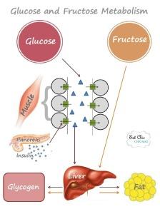 """""""glucose metabolism"""""""